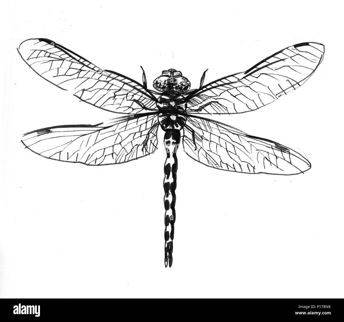 Libellule dessin noir et blanc encre banque d 39 images - Libellule dessin ...