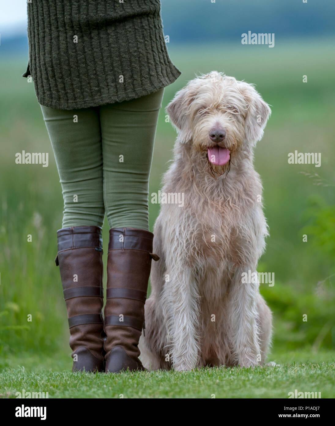 Une femme avec son dos à la caméra dans des bottes de cuir se tenait dans un enclos des épinettes, avec un chien, qui est un ressortissant slovaque aux cheveux rugueux, Pointeur et affectueusement affectueusement assis à côté d'elle Photo Stock