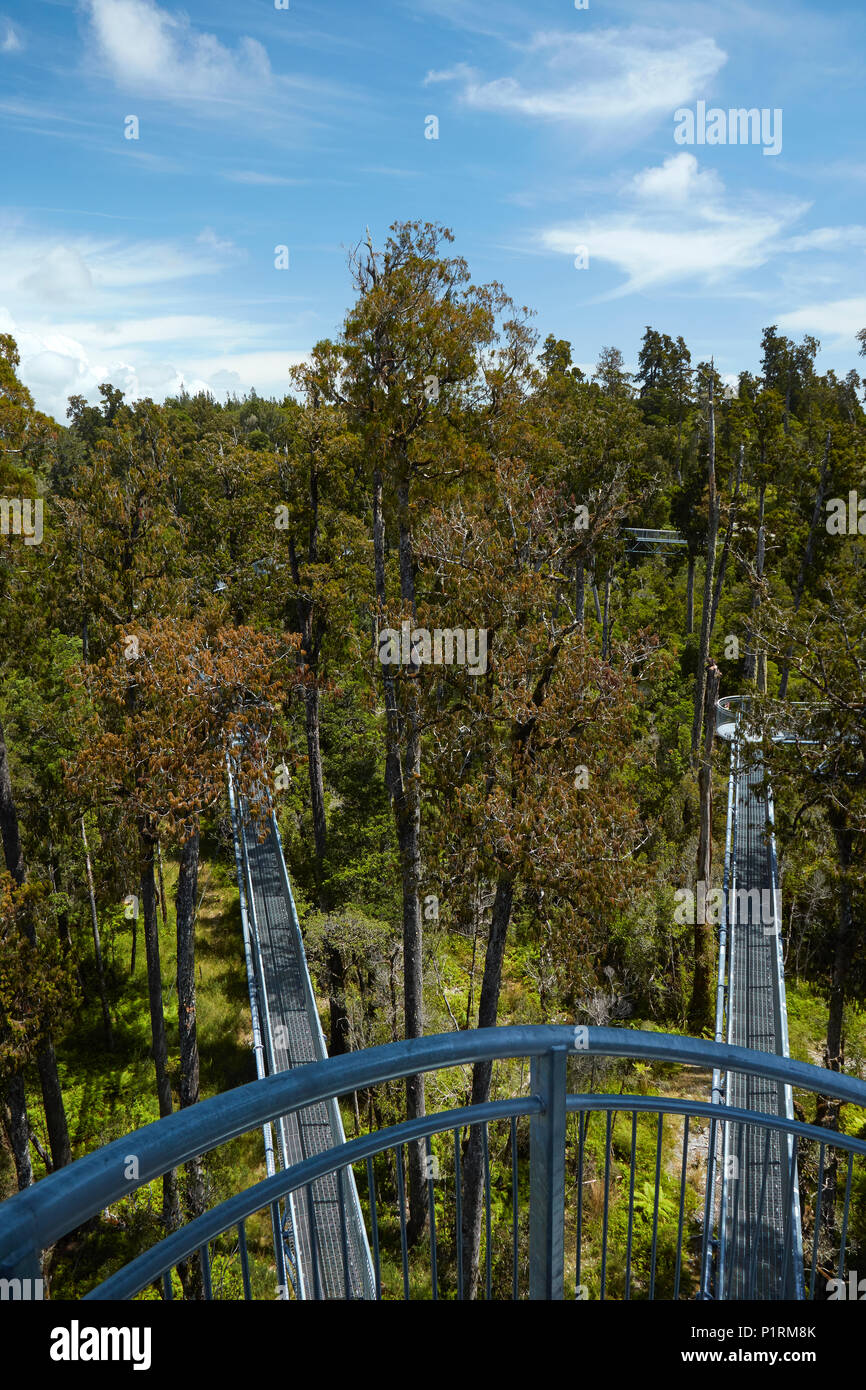 Treetop walk, près de Hokitika, West Coast, South Island, New Zealand Photo Stock