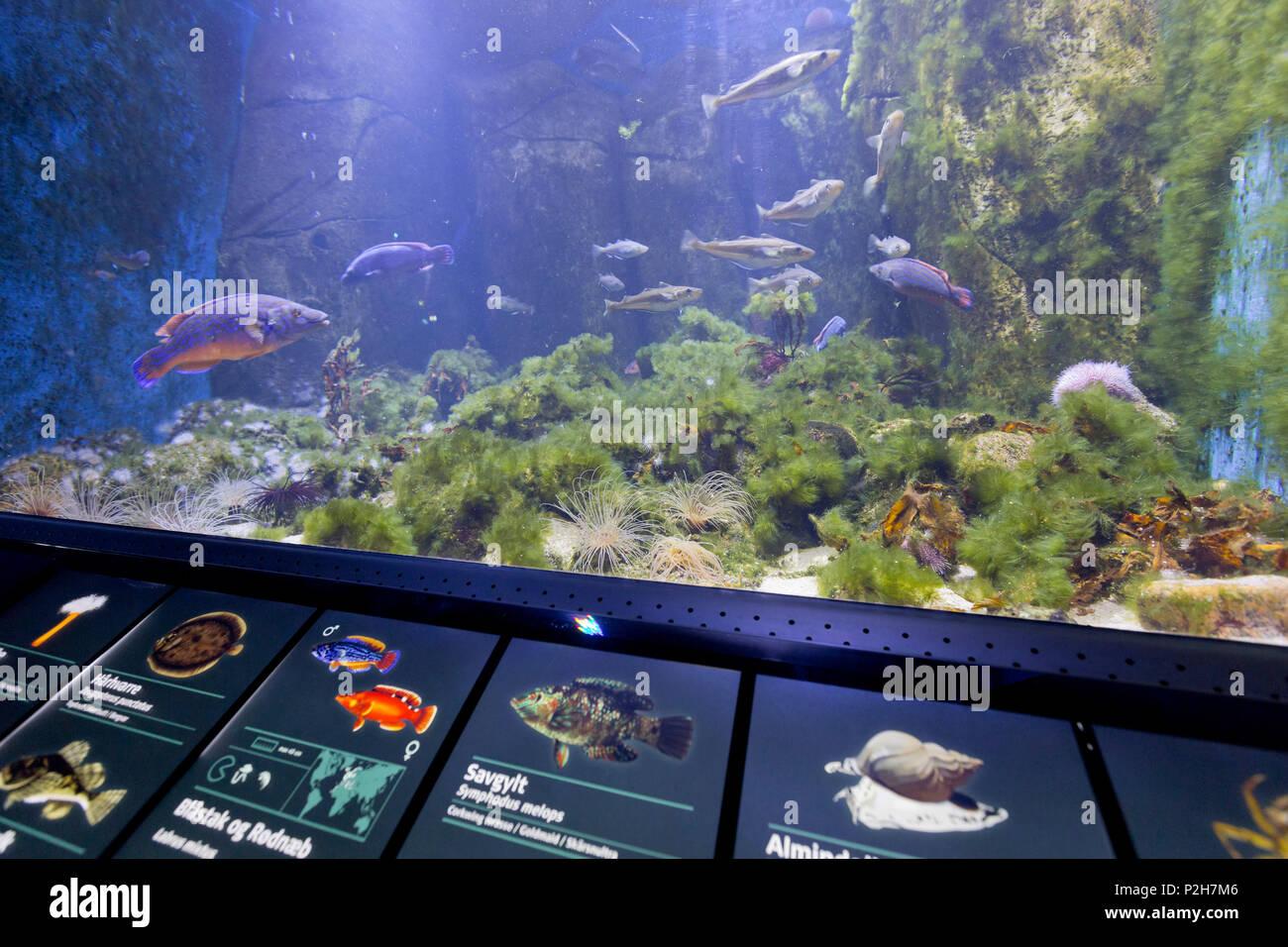 Den Bla planète bleu, Plante Aquarium, Copenhague, Danemark Photo Stock