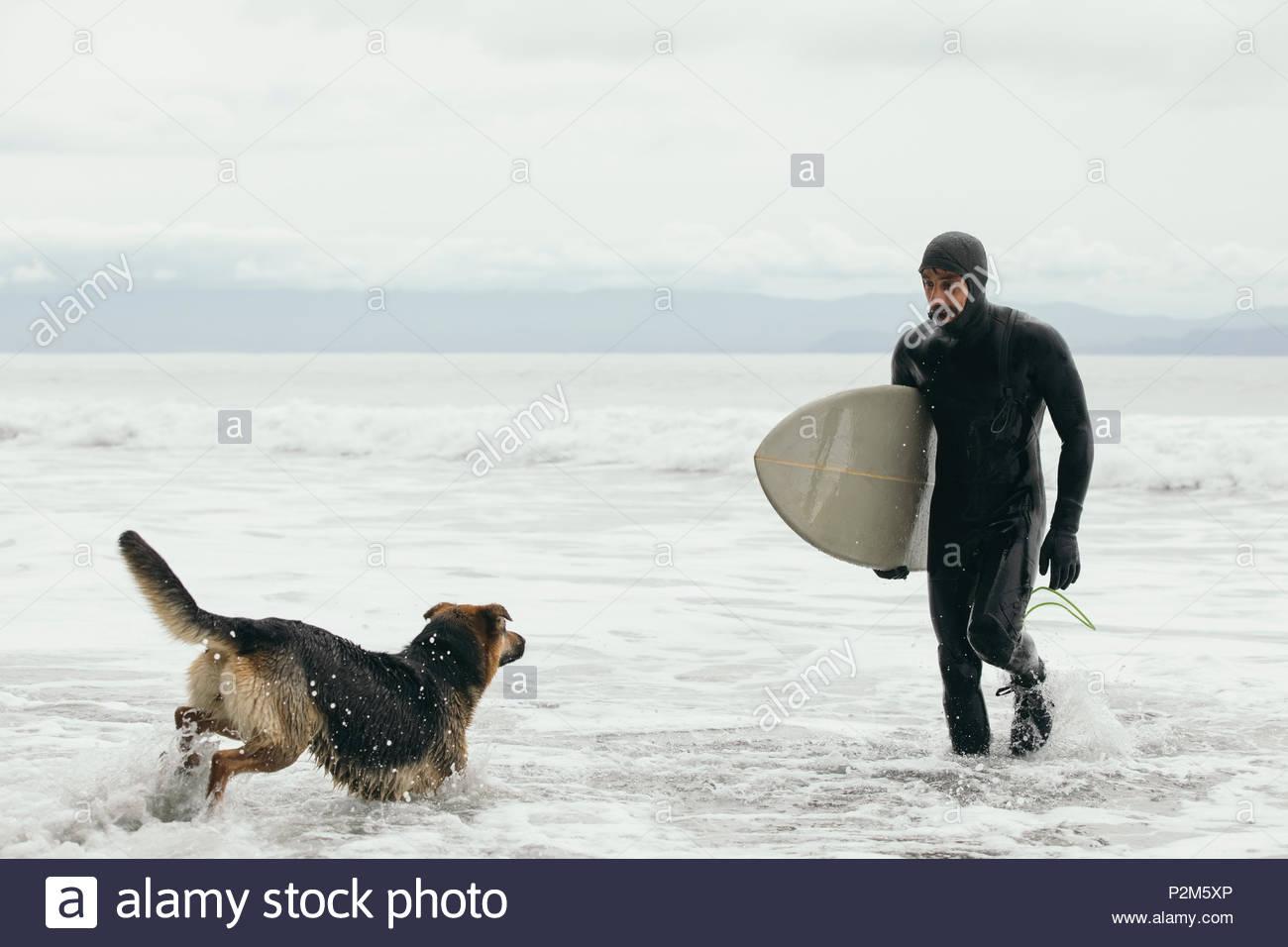 Surfer avec chien mâle transportant dans océan surf surfboard Photo Stock