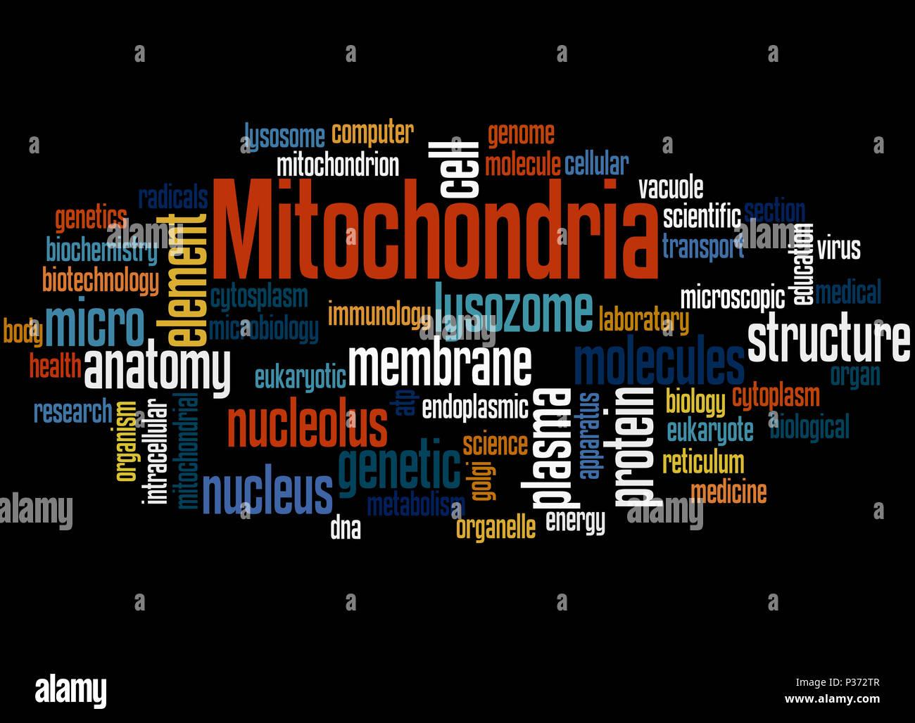 Les mitochondries, mot concept cloud sur fond noir. Banque D'Images