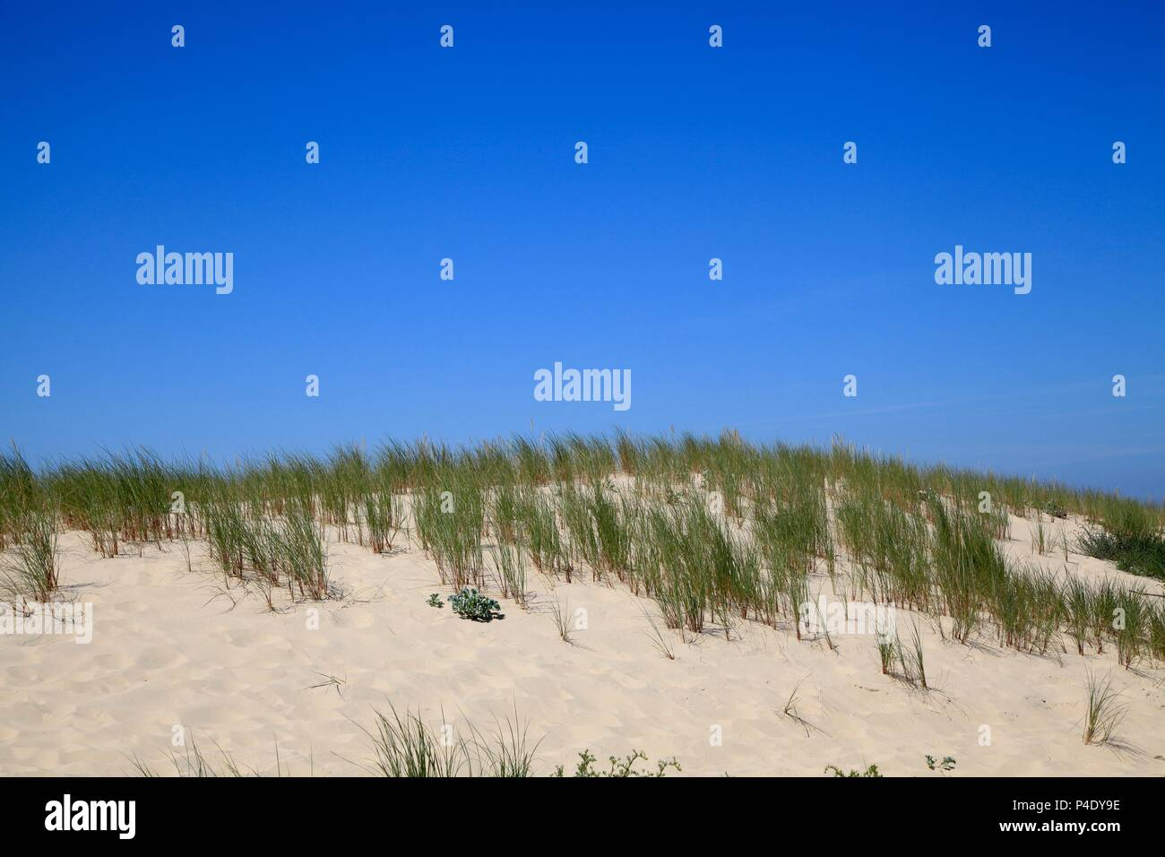 Plage de l'Horizon, Cap Ferret, Aquitaine, France Photo Stock