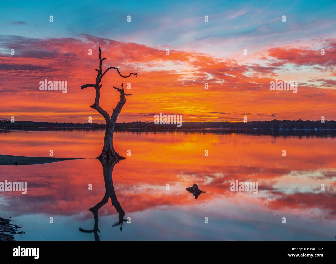 Lumière de mère nature y compris un arbre mort solitaire avec un reflet dans l'eau. Photo Stock
