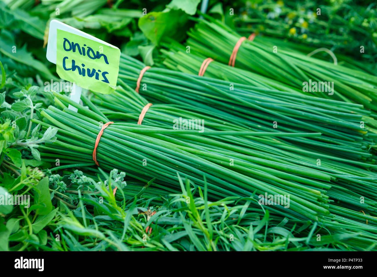 Ciboulette oignon frais à un marché fermier local Photo Stock