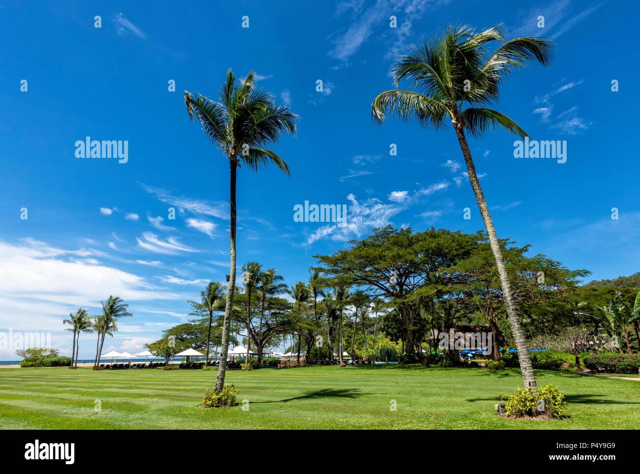 Palm Trees against a blue sky à Kota Kinabalu sur Bornéo, Malaisie Banque D'Images