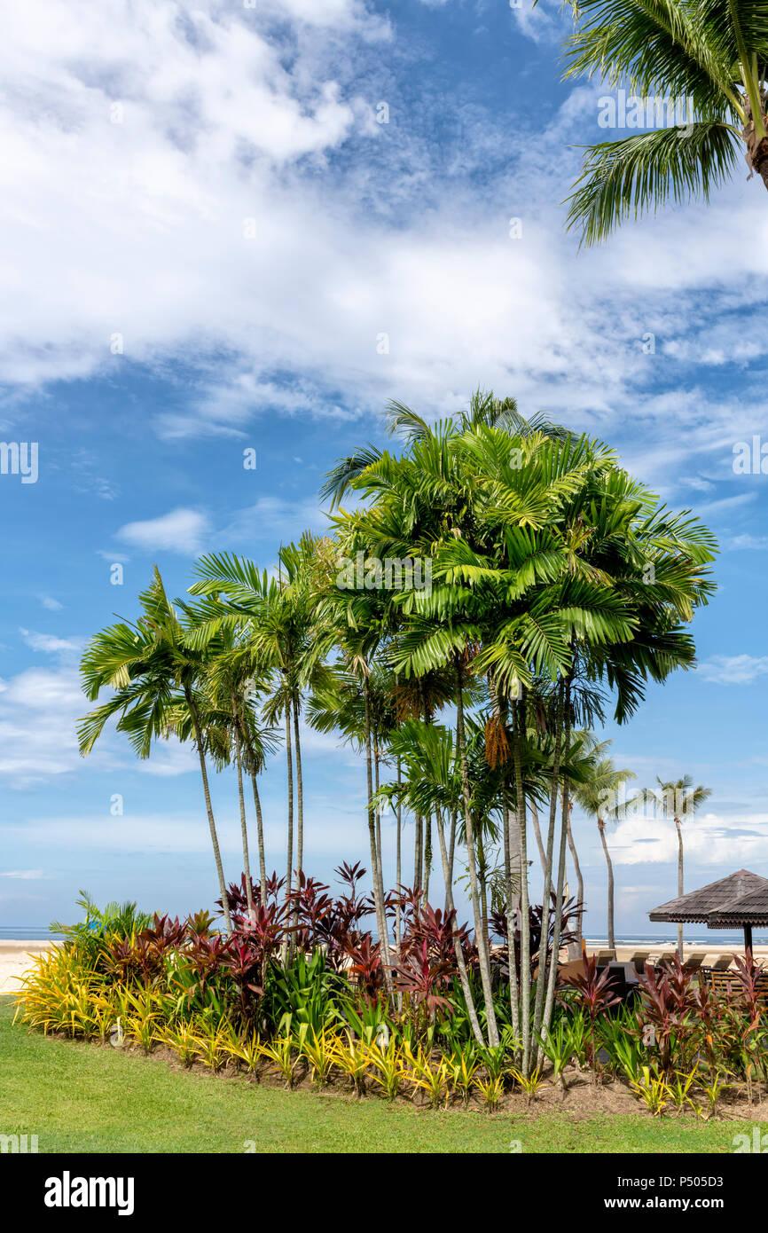 Palmiers et autres plantes exotiques contre un ciel bleu à Bornéo, Malaisie Photo Stock