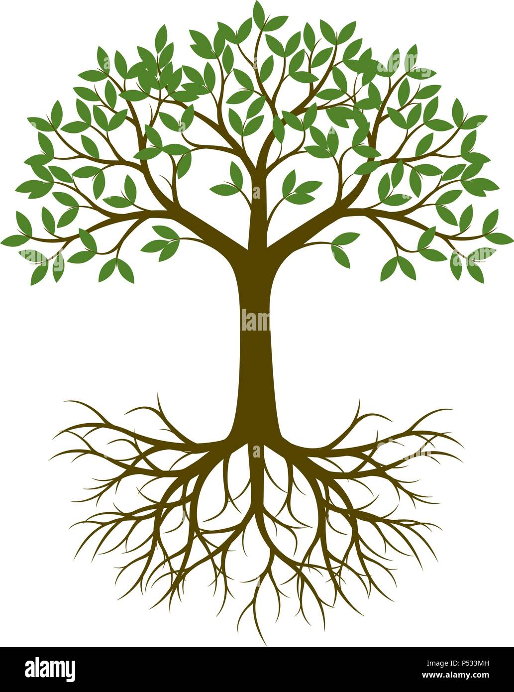 Arbre Avec Racine arbre vert avec racine. vector illustration vecteurs et illustration