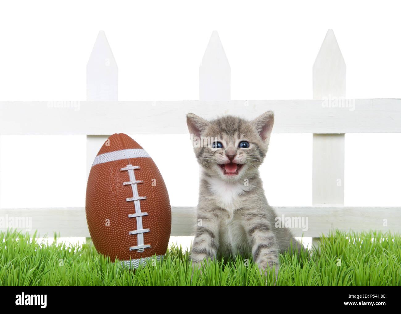 Petite Cloture De Jardin Blanche petit bébé chaton tabby assis dans l'herbe verte retour