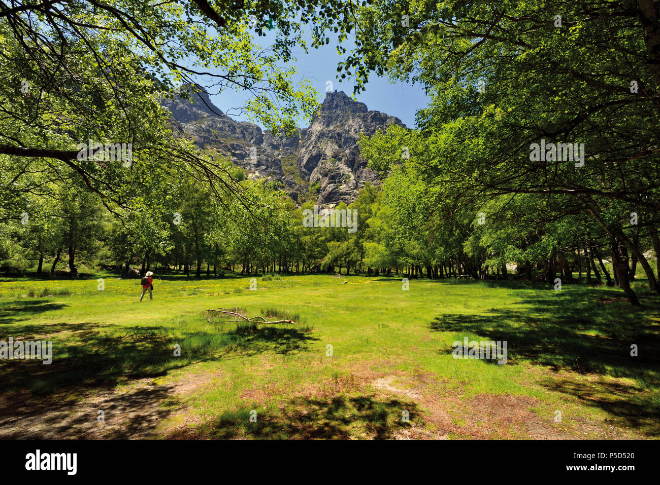 Femme marche dans un champ ouvert entouré par des pics de montagne et arbres Photo Stock