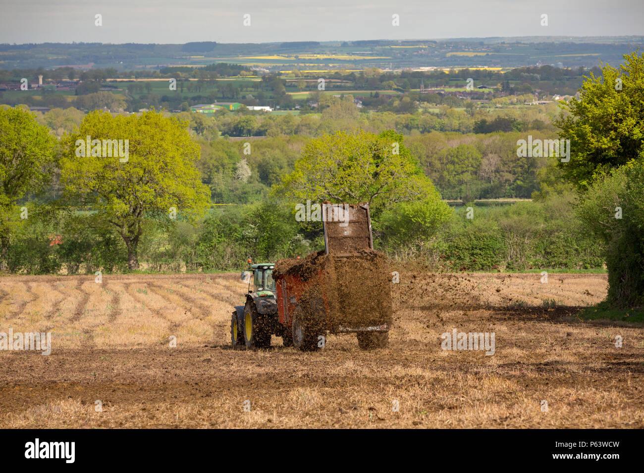 Un agriculteur à l'aide d'un épandeur de fumier derrière son tracteur pour diffuser un mélange d'engrais organique et le foin sur ses terres pour la fertilisation. Photo Stock