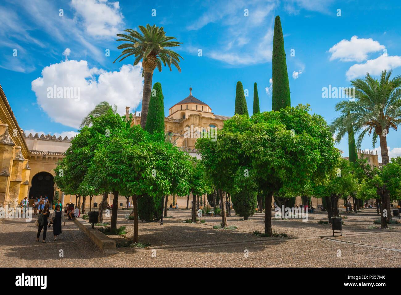 Vue sur le Patio de los Naranjos (la Cour des Orangers) dans la Mosquée Cathédrale de Cordoue (La Mezquita) à Cordoba (Cordoue), Andalousie, espagne. Photo Stock