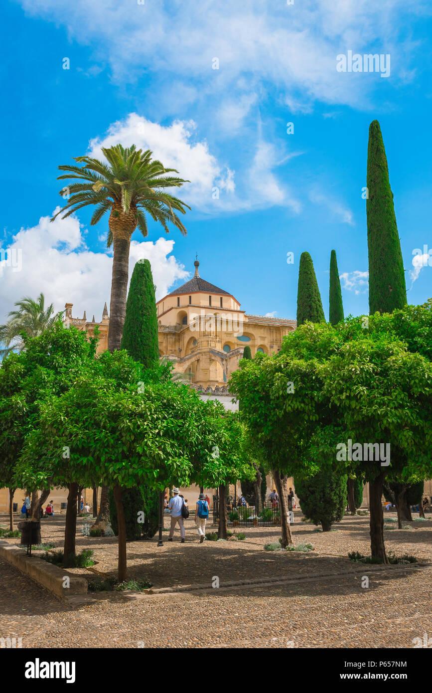 Vue sur le Patio de los Naranjos (la Cour des Orangers) dans la Mosquée Cathédrale de Cordoue (La Mezquita) à Cordoba (Cordoue), Andalousie, Espagne Photo Stock