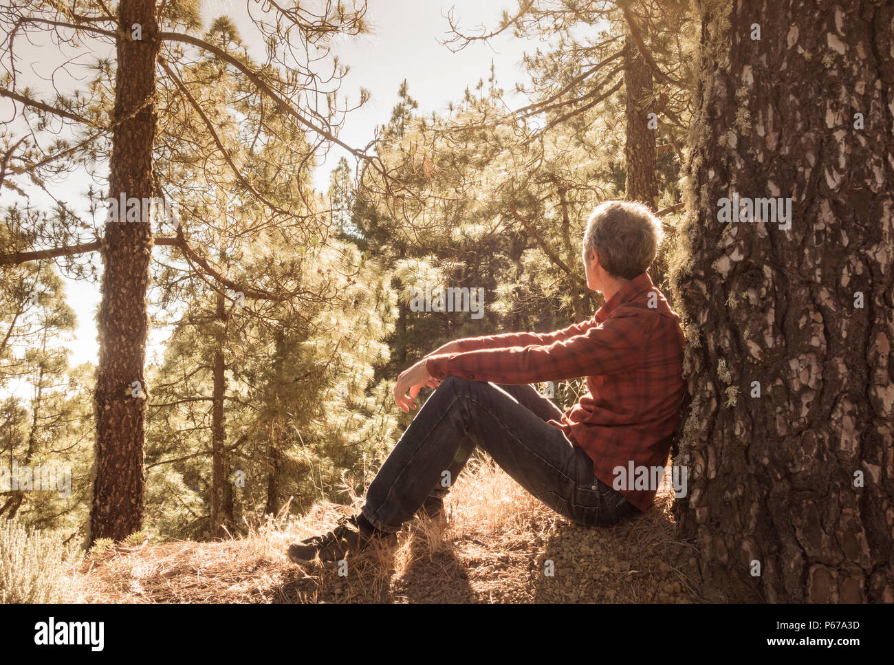 Shinrin, Yoku (forêt). Slim, mature male hiker relaxing in early morning sunshine en forêt de pins. Photo Stock