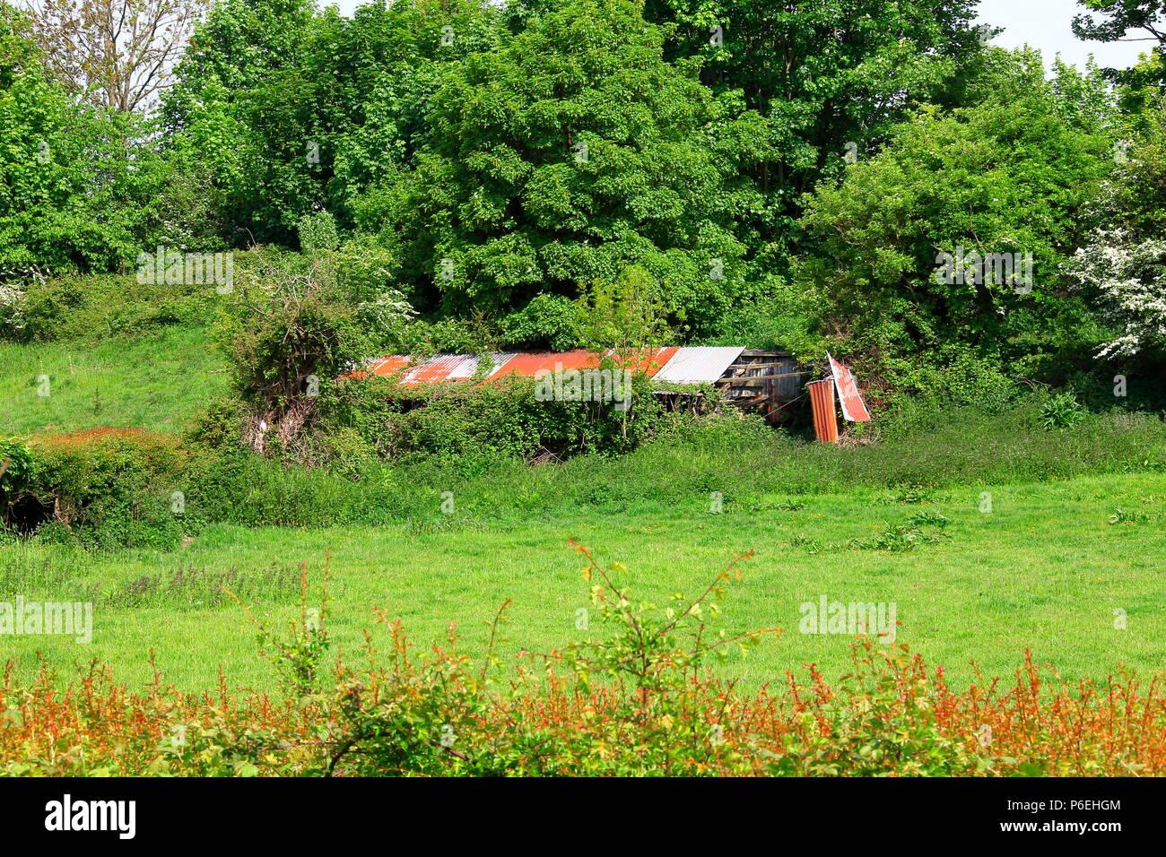 Un ancien refuge d'animaux en décomposition sur le côté d'un champ fait de bois et de feuilles d'acier galvanisé qui est tombée en ruine et à la décomposition. Banque D'Images