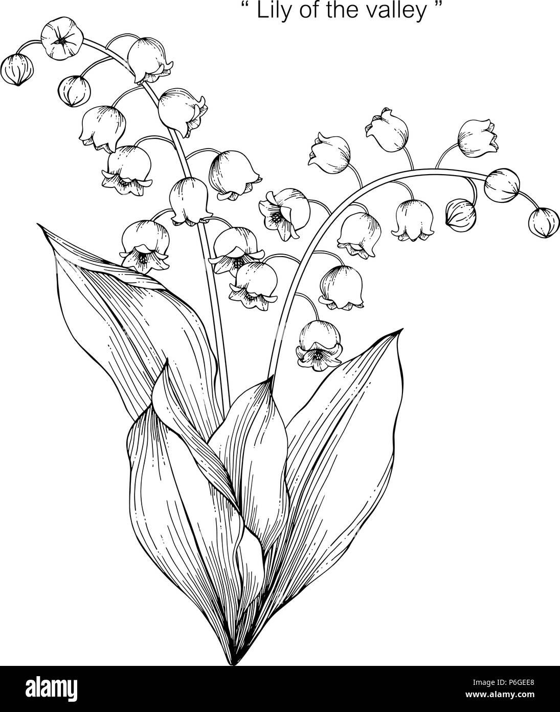Le Muguet Fleur Dessin Illustration Noir Et Blanc Avec