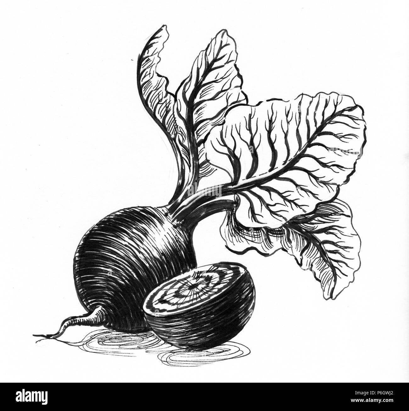 Lencre Végétale Betterave Illustration Noir Et Blanc Banque