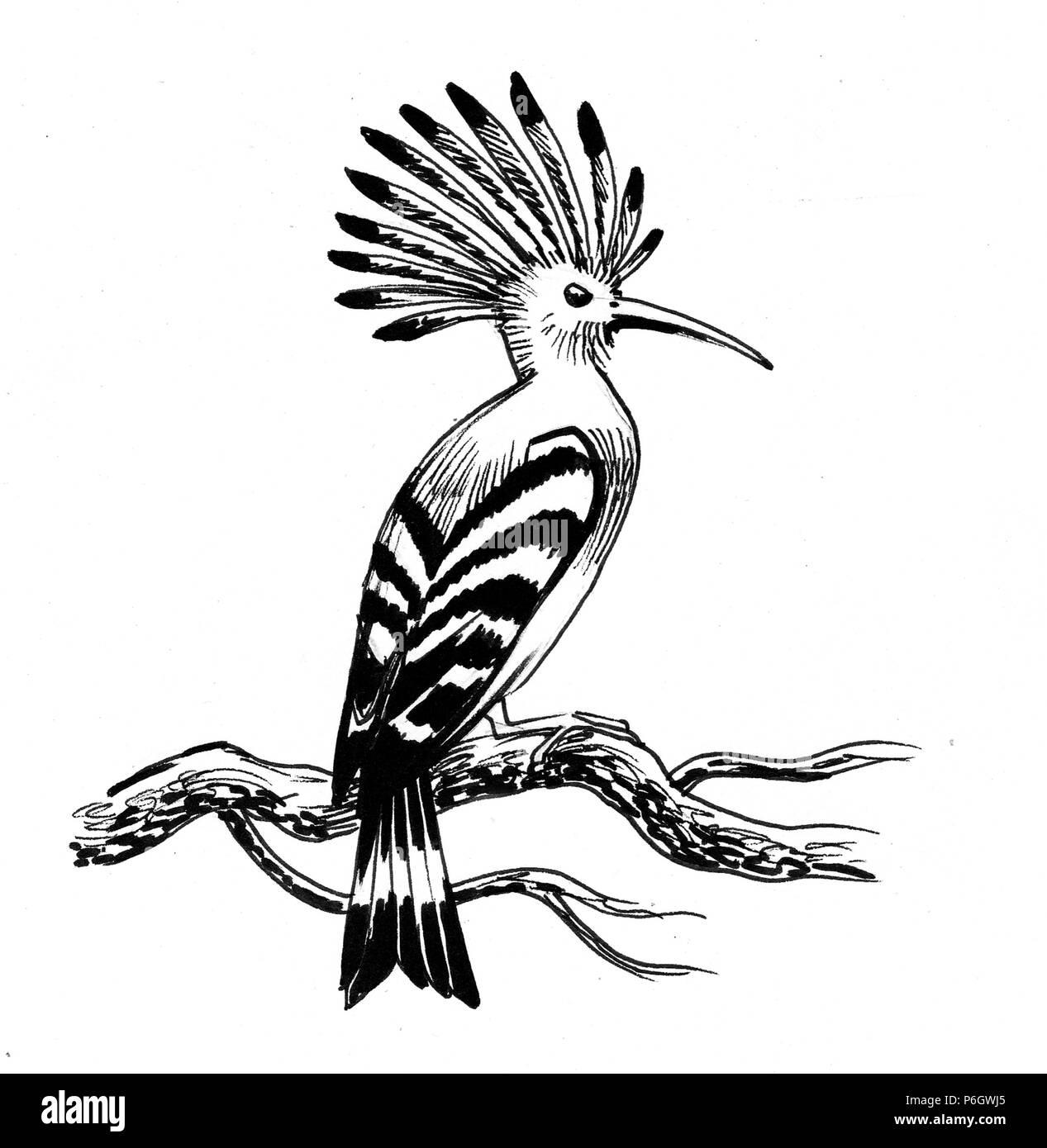 Huppe Fasciée Oiseau Sur Un Arbre Illustration Noir Et