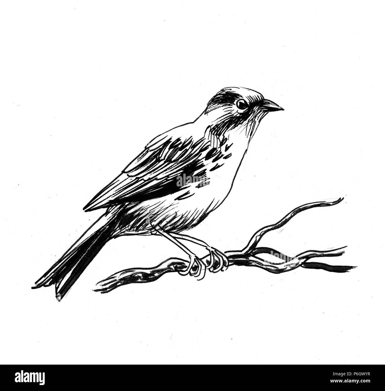 Sparrow Oiseau Posé Sur Une Branche D Arbre Illustration