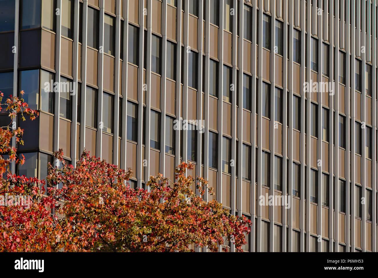 Détail de l'architecture Windows, d'un immeuble de bureaux dans un motif répétitif, angle diagonal, avec arbre d'automne crest en face Photo Stock