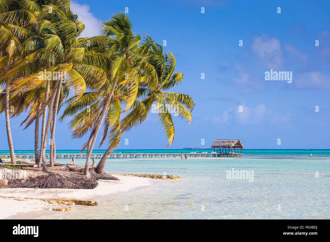 Cuba Jardines del Rey, Cayo Guillermo, Playa El Paso, des palmiers sur la plage de sable blanc Photo Stock