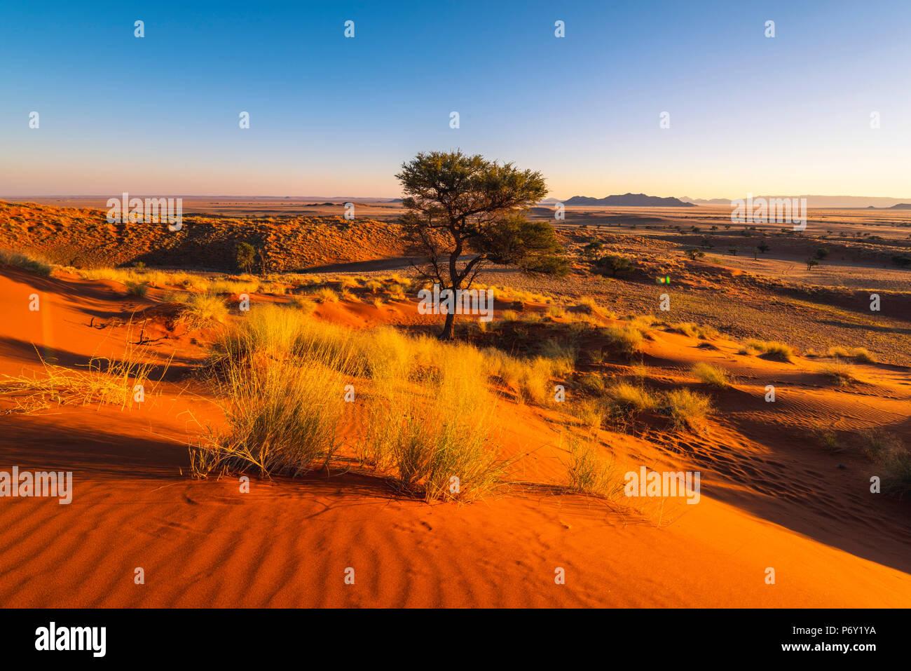Namib-Naukluft National Park, Namibie, Afrique. Petrified dunes rouges. Photo Stock