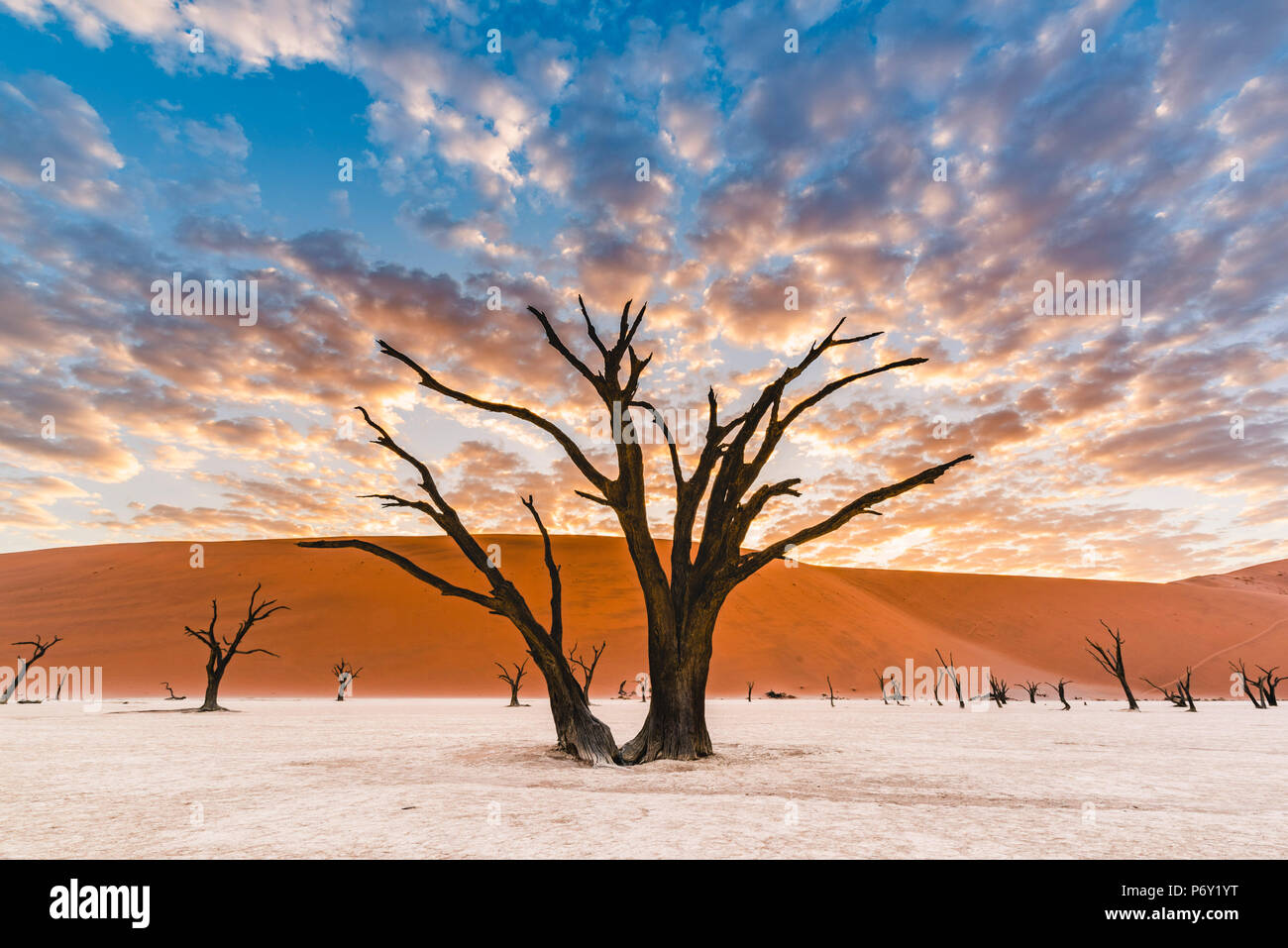 Deadvlei clay pan, Namib-Naukluft National Park, Namibie, Afrique. Acacia arbres morts et des dunes de sable. Photo Stock