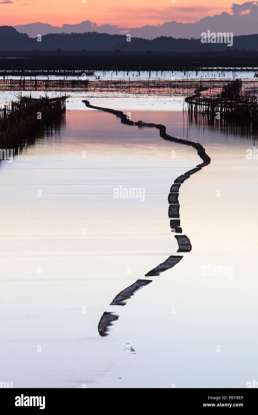 Les parcs à huîtres dans la forme d'un serpent au coucher du soleil, la baie d'Halong, Province de Quang Ninh, Vietnam, Asie du Sud-Est, du Nord-Est Photo Stock