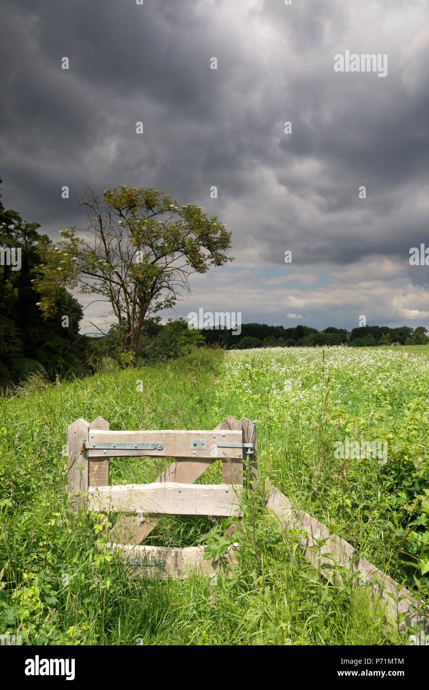Prairie avec de l'air menaçant Photo Stock