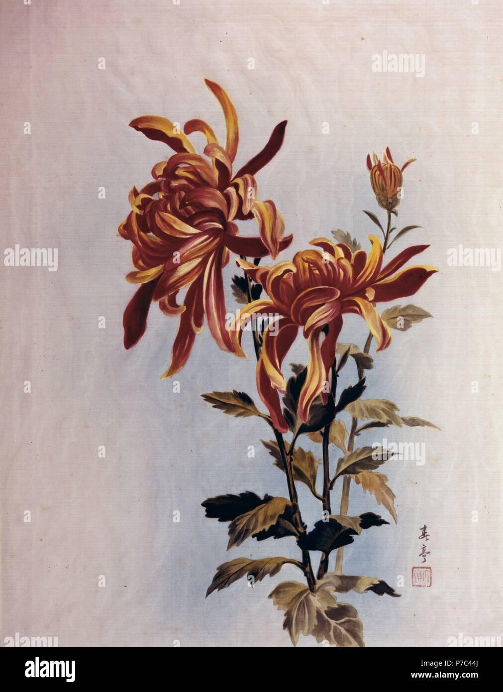 Crisantemo. Musée: FREE LIBRARY PHILADELPHE aux Etats-Unis. Photo Stock