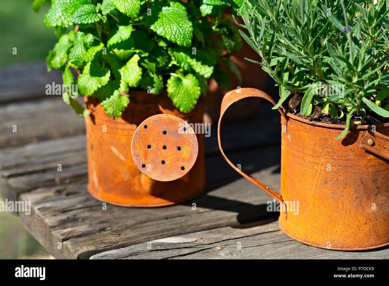 Arrosage Pour Plantes En Pot vieux, grunge, métal rouillé pot d'arrosage et d'un petit