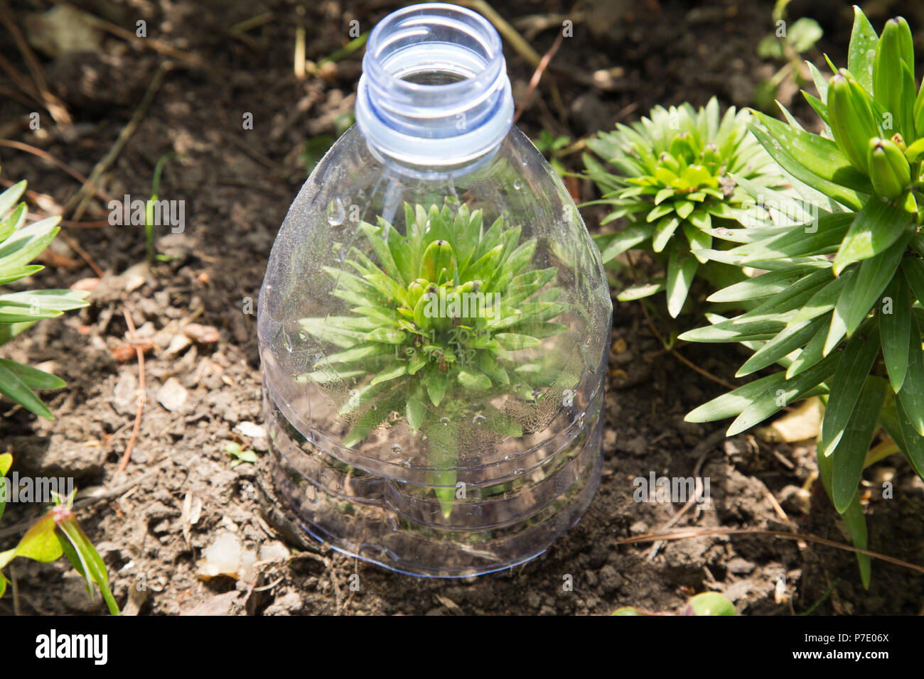 Recyclage du plastique bouteille comme mini serre dans le ...