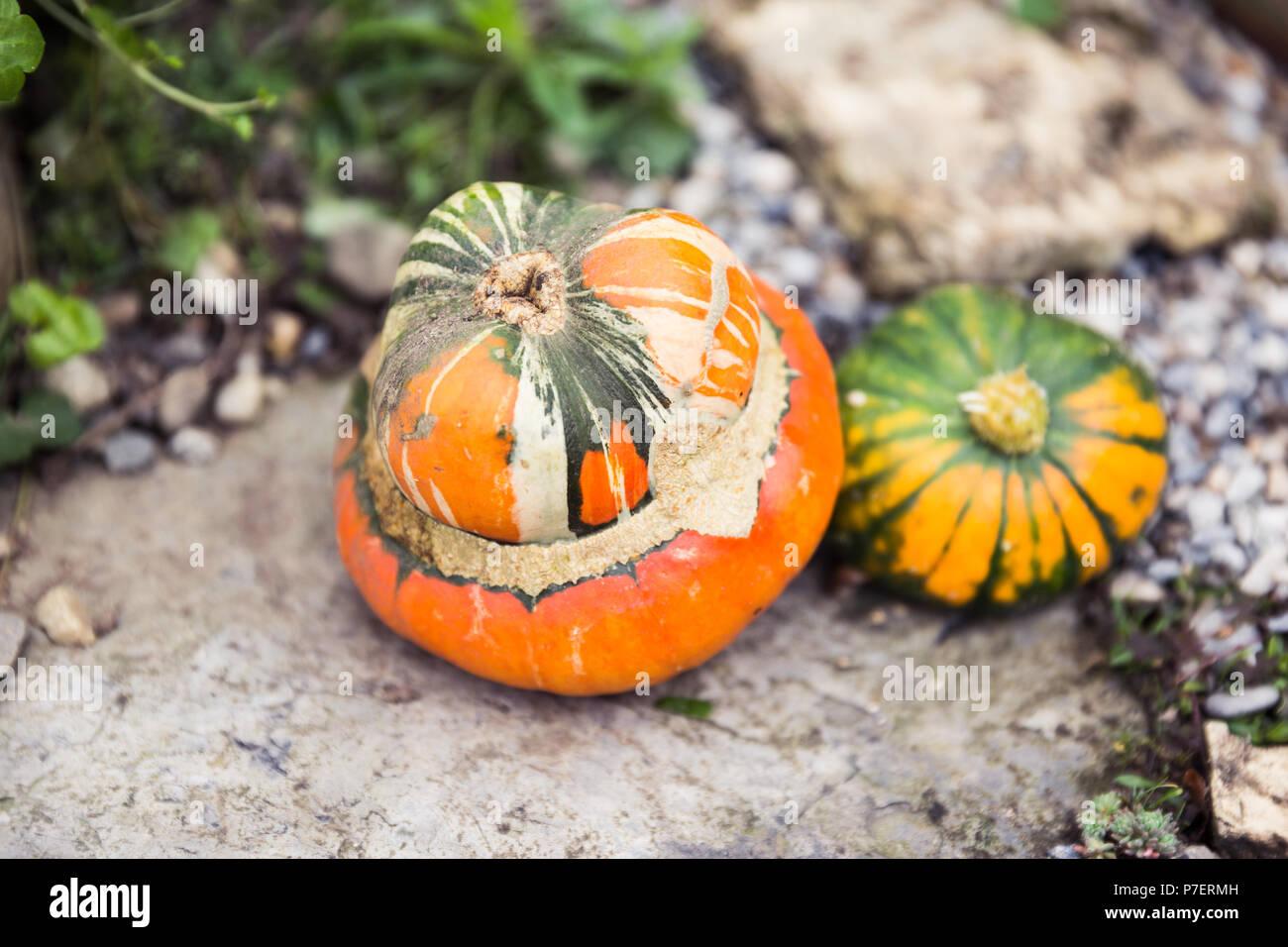 Graines de citrouille fait maison et décoration de jardin Banque D ...
