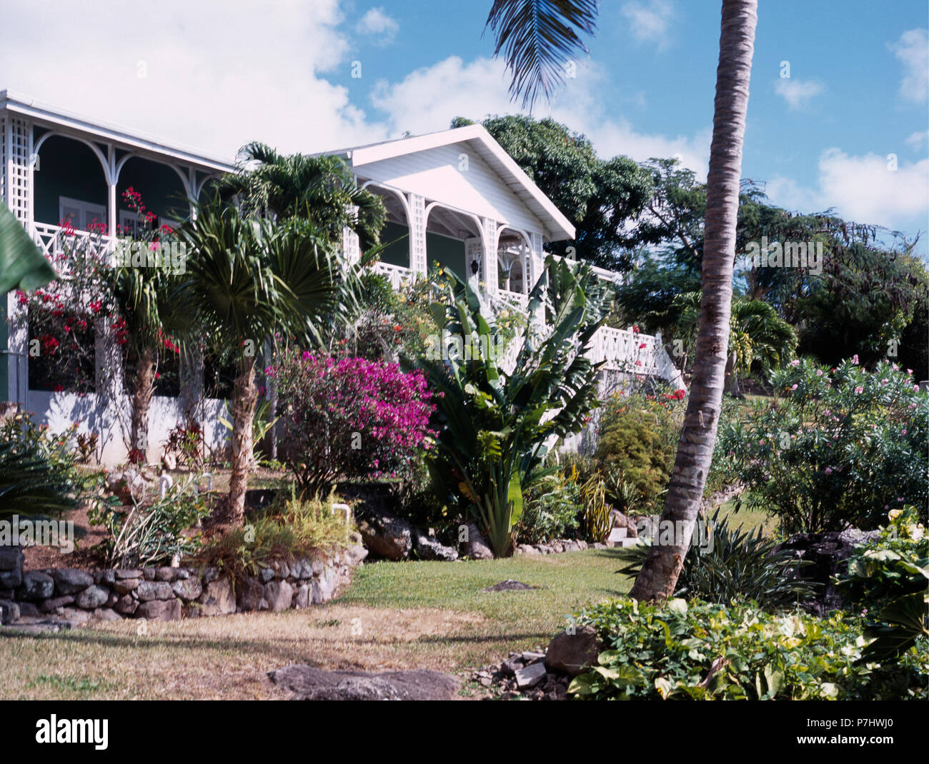 Palmiers Et Arbustes Exotiques Au Jardin En Face De Maison