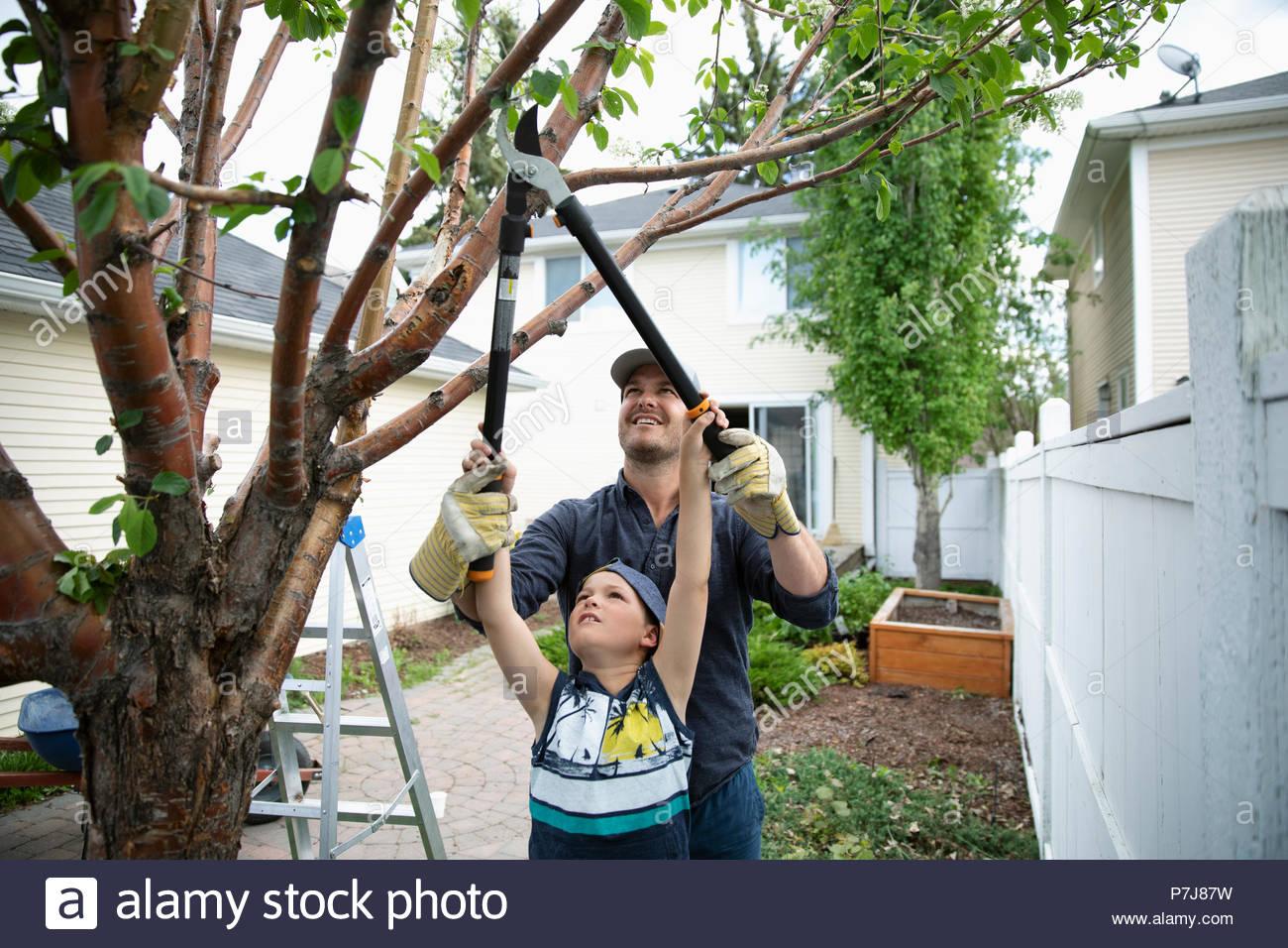 Père et fils faire des travaux extérieurs, de l'élagage arbre en cour arrière Photo Stock