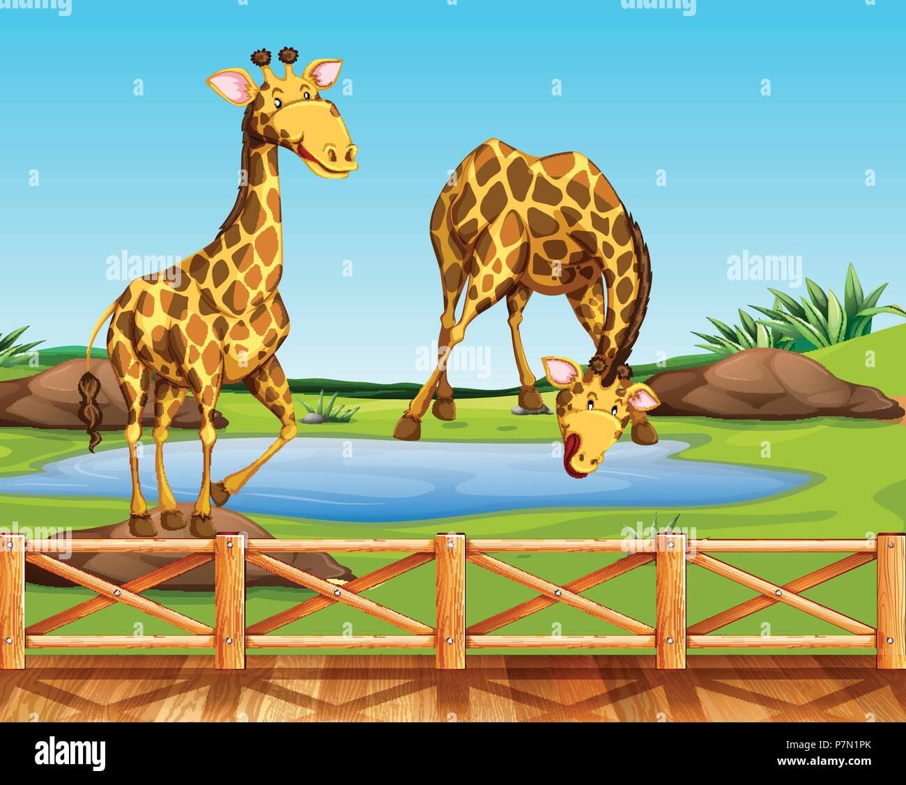Deux girafes dans un zoo illustration Illustration de Vecteur
