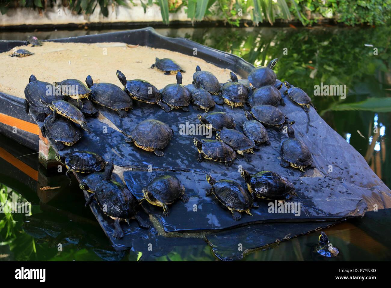 Des tortues dans le bassin du jardin à l\'intérieur de la gare d ...