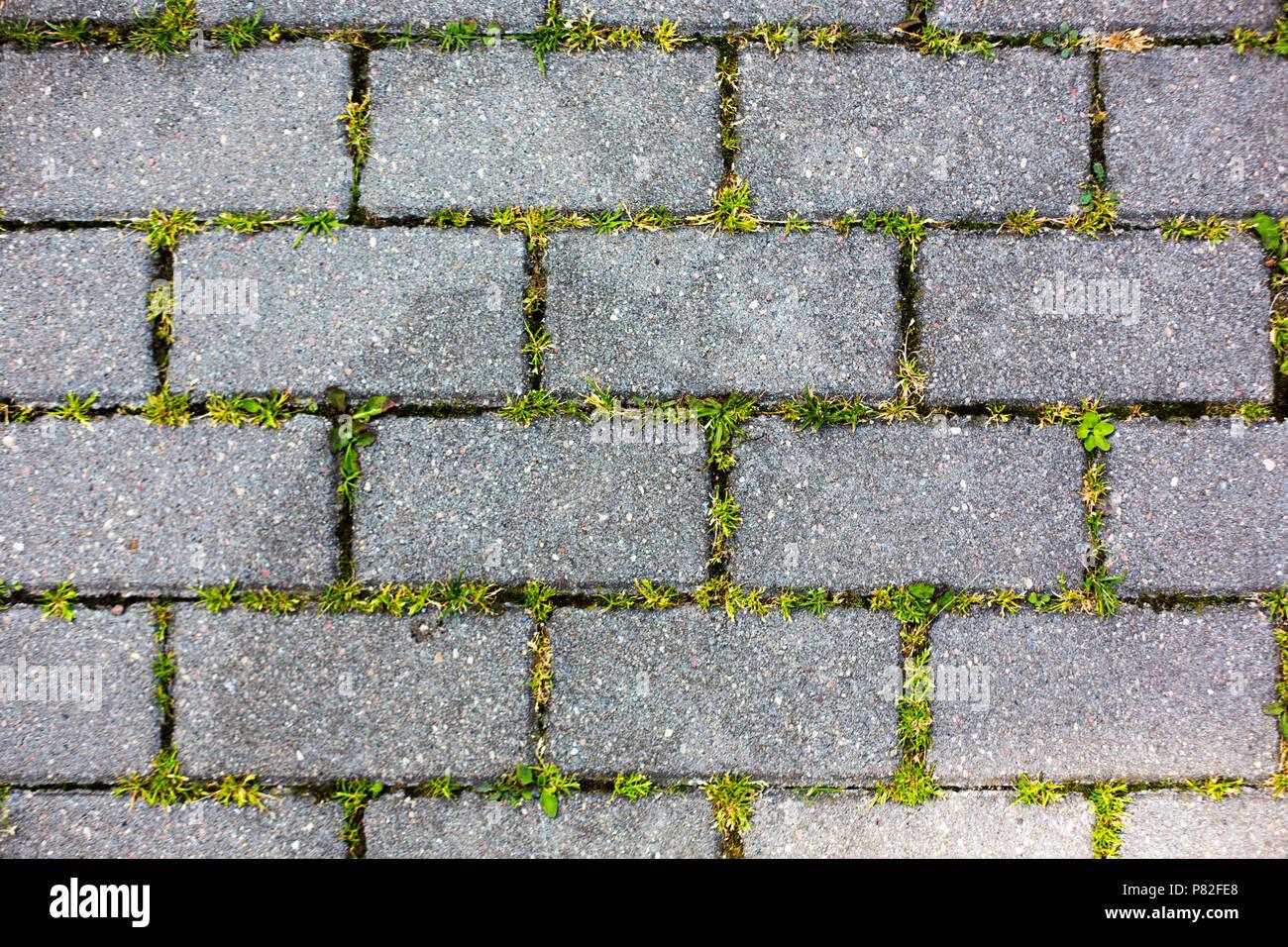 Dalle Beton Parking Herbe un chemin de béton carreaux avec motif herbe texture