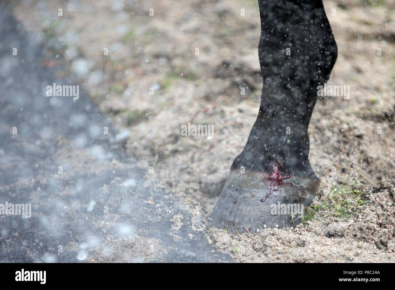 Iffezheim, blessure qui saigne sur la couronne d'un sabot Photo Stock