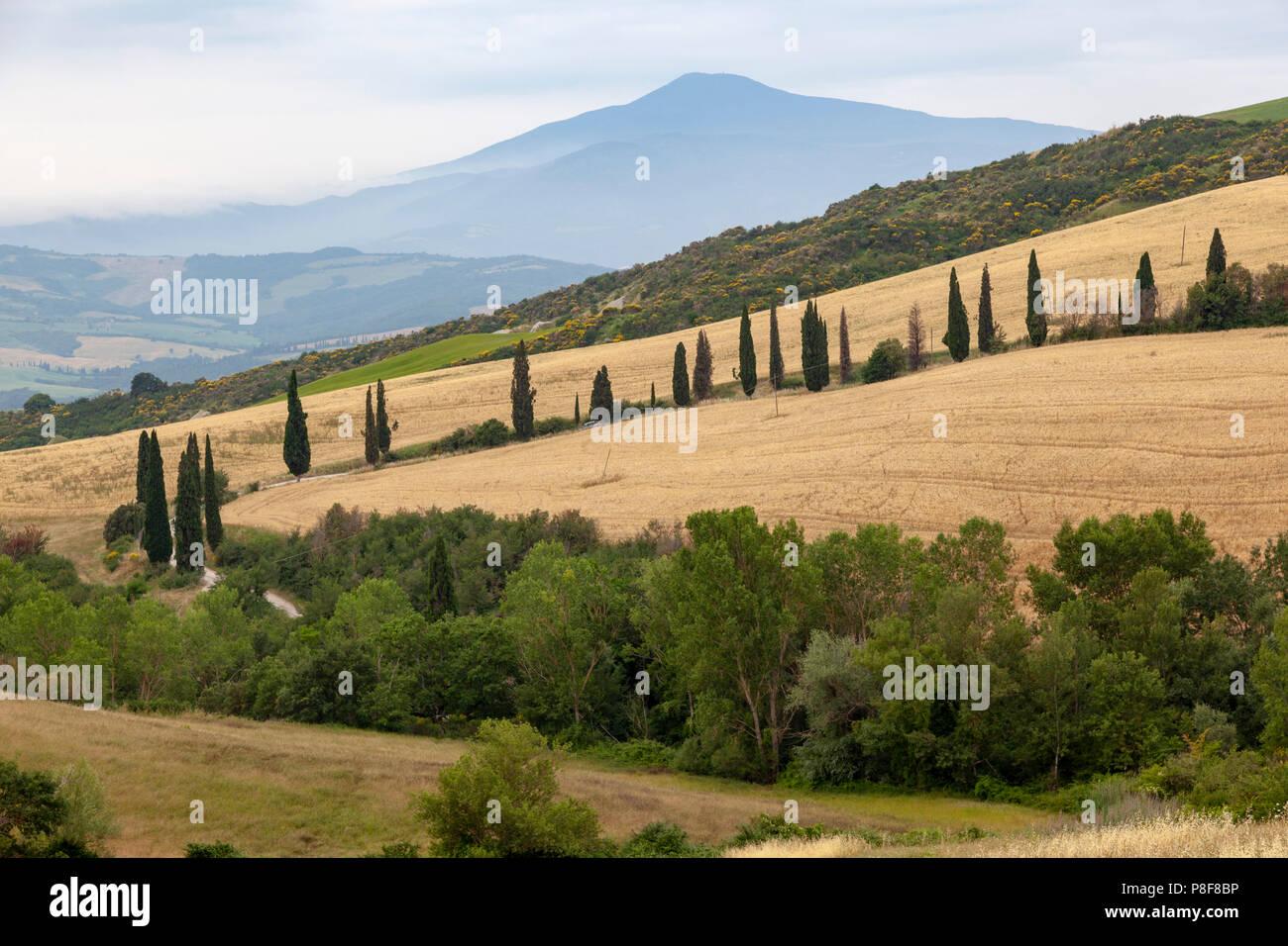 À proximité de Montepulciano, un alignement de cyprès le long d'une voie avec en arrière-plan le Mont Amiata (Toscane). Aux environs de Montepulciano. Photo Stock