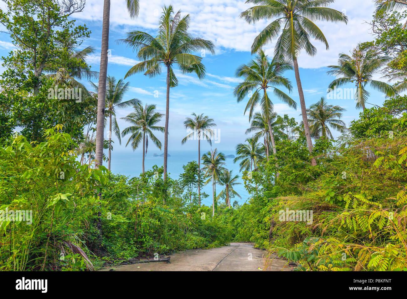 La nature de Koh Samui en Thaïlande. Photo Stock