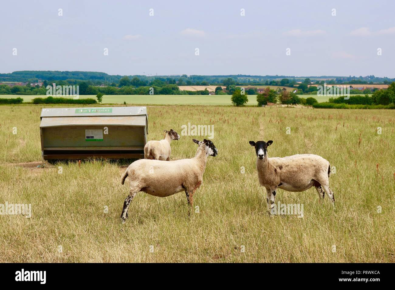 Rencontres moutons