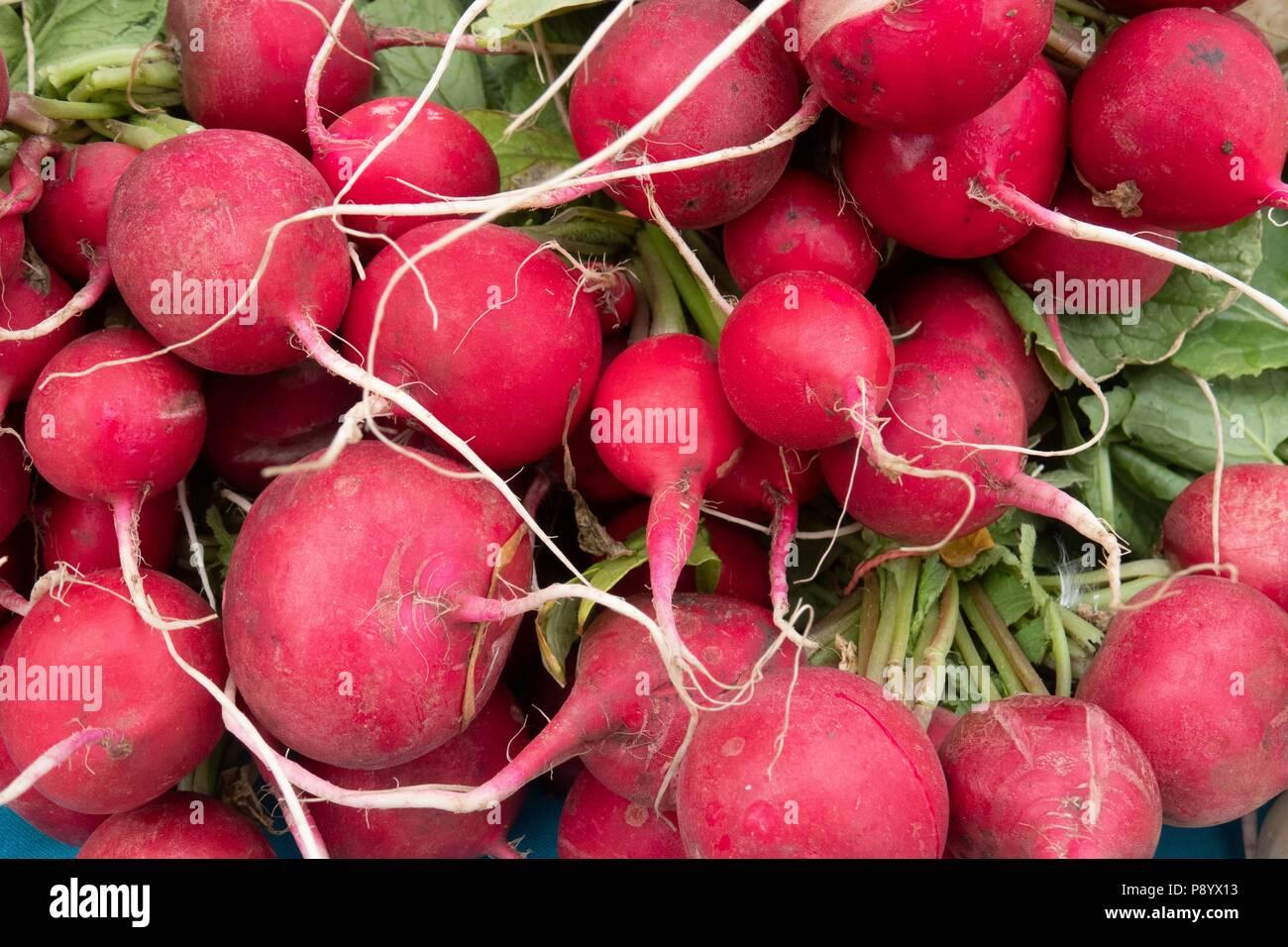 Une bande de radis rouge en culture biologique pour la vente au marché de producteurs du Nouveau-Mexique Taos Photo Stock