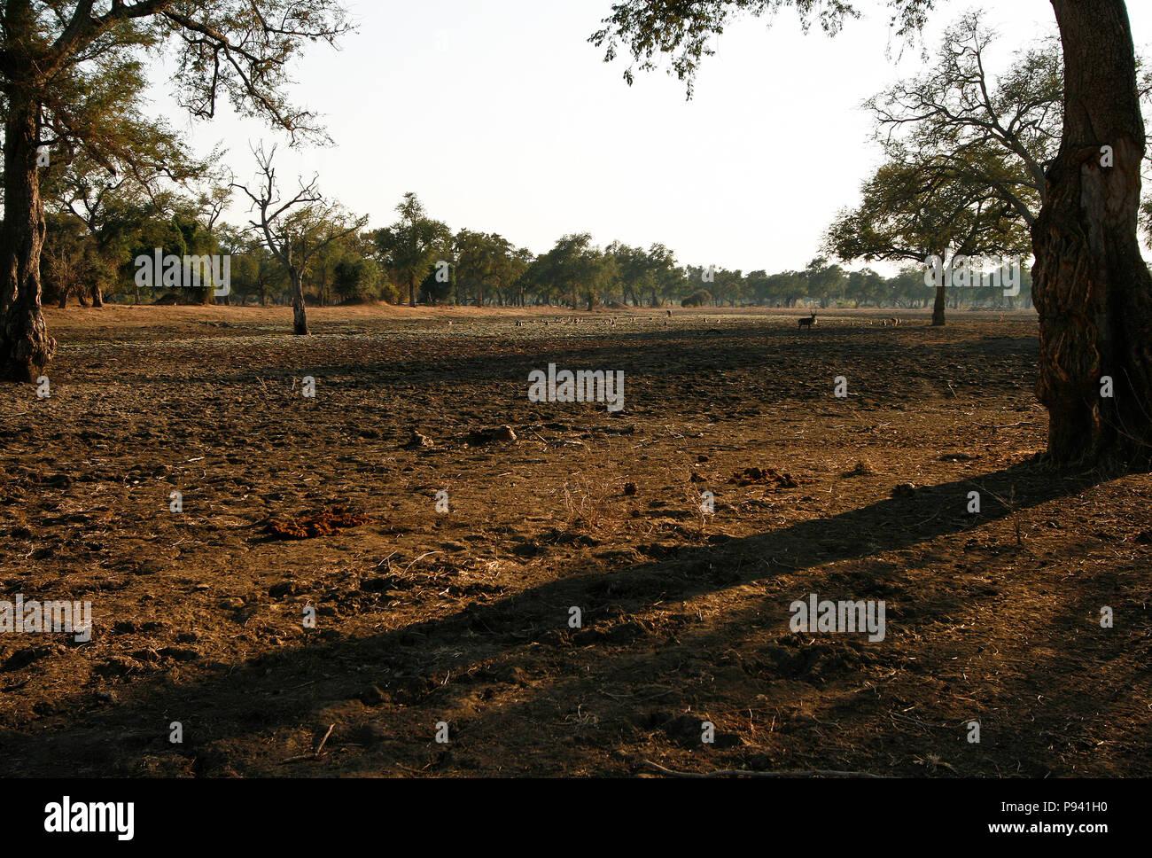 Réserve de parc national. Zimbabwe Photo Stock