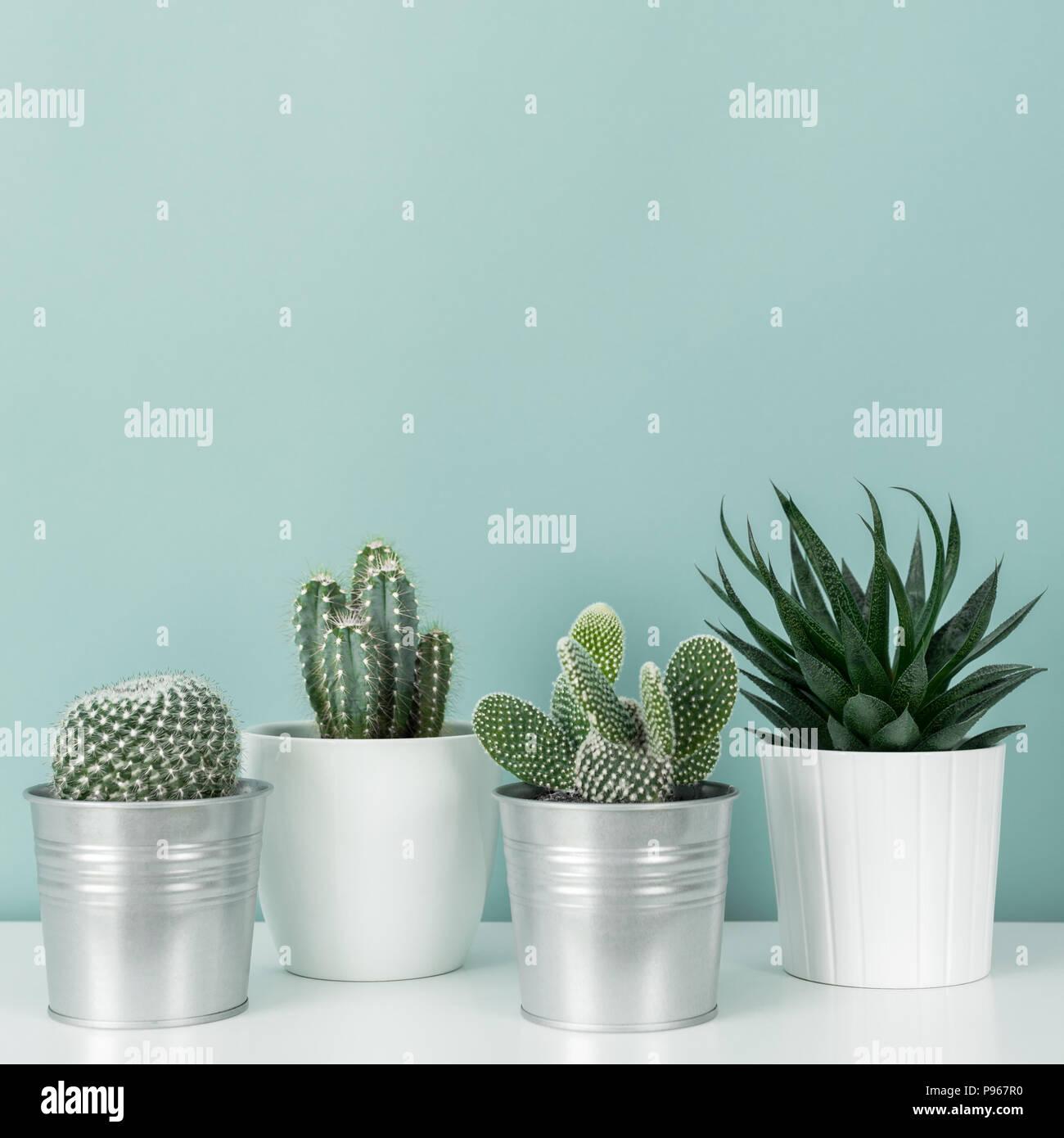 Décoration chambre moderne. Collection de divers cactus et plantes ...