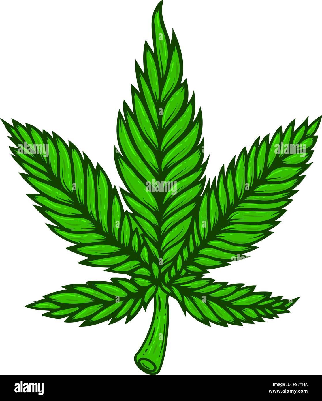 Illustration De La Feuille Cannabis Sur Fond Blanc Lelement Conception Pour Poster Carte Visite Banniere T Shirt Image Vectorielle