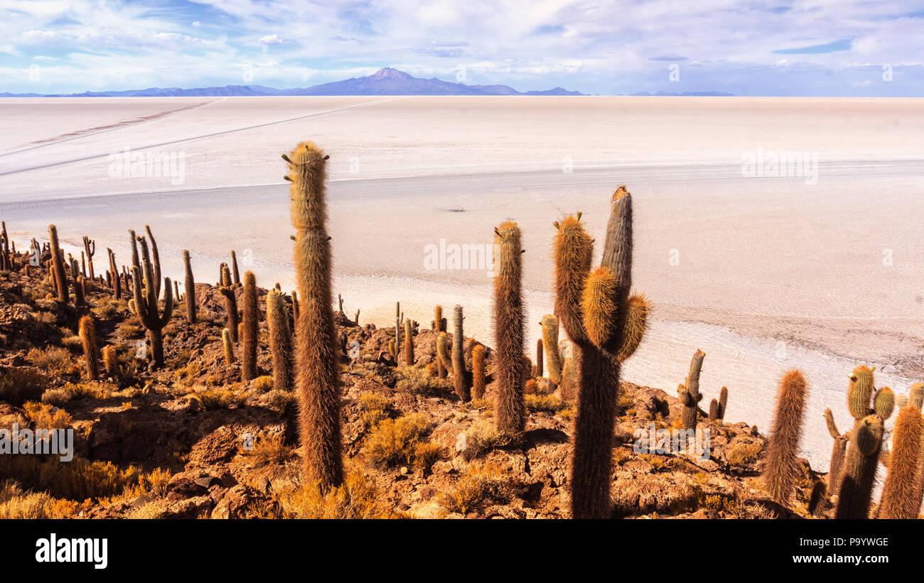 Dans l'île de Incahuasi Uyuni Photo Stock