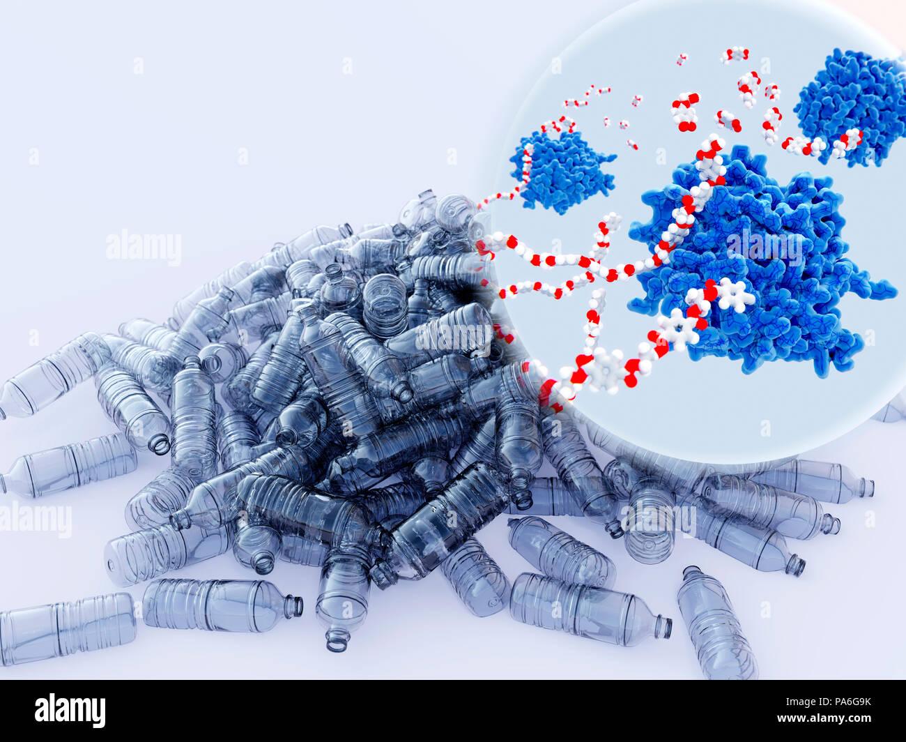 PETase enzymes décomposant le plastique, l'illustration. PETase (bleu) est une enzyme bactérienne qui décompose le PET (polyéthylène téréphtalate) bouteilles plastiques (illustré) de molécules monomères (en médaillon en haut à droite). L'ensemble du processus de dégradation bactérienne acide téréphtalique purifié des rendements et de l'éthylène glycol, qui sont écologiquement inoffensif. Photo Stock