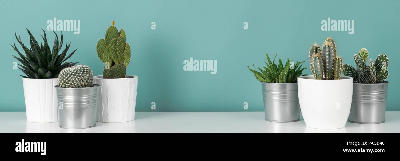 Décoration chambre moderne. Collection de divers cactus en pot ...