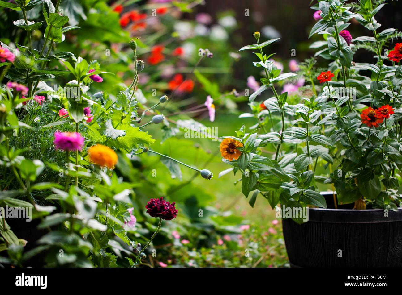 Jardin en été en pleine floraison Banque D'Images